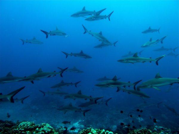 croisière plongée en Polynésie