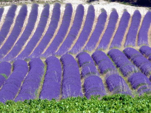 La Provence à moto