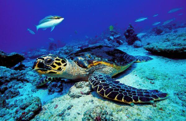 Voyage plongée aux Seychelles