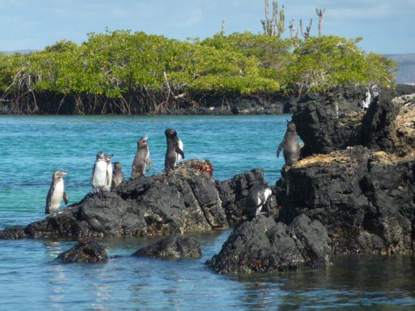 Voyage plongée aux Galapagos