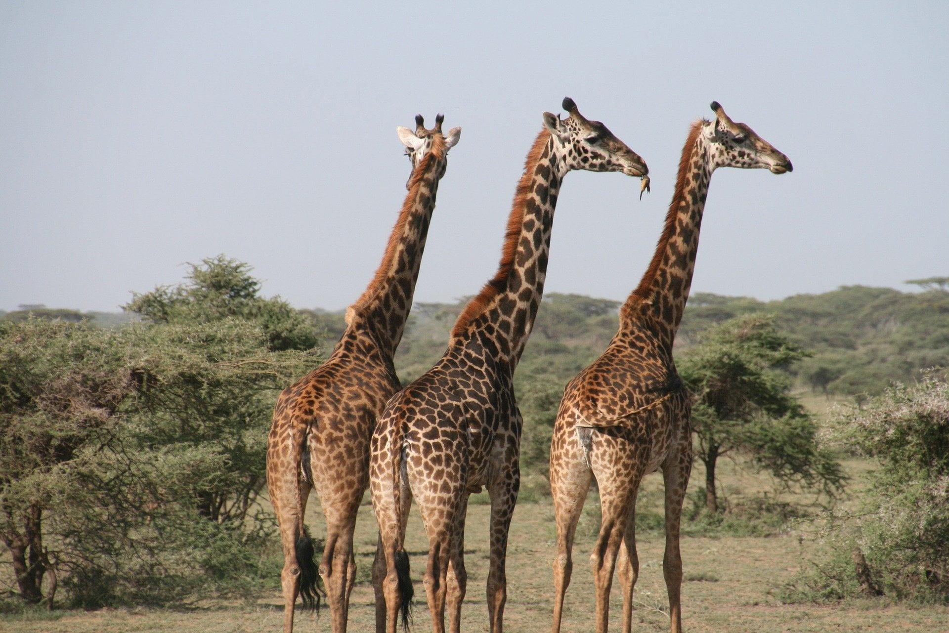 Safari terrestre
