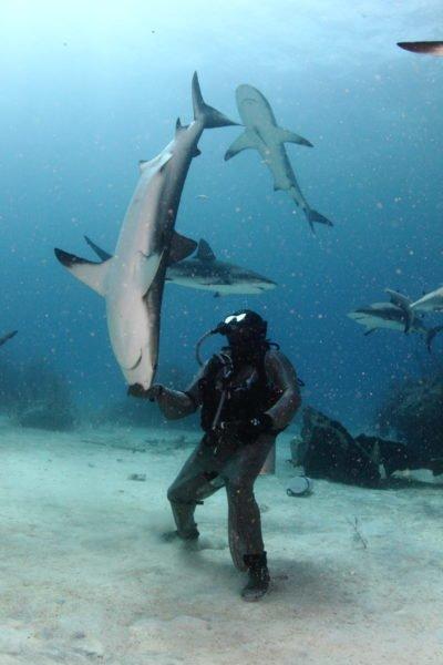 Voyage plongée aux Bahamas