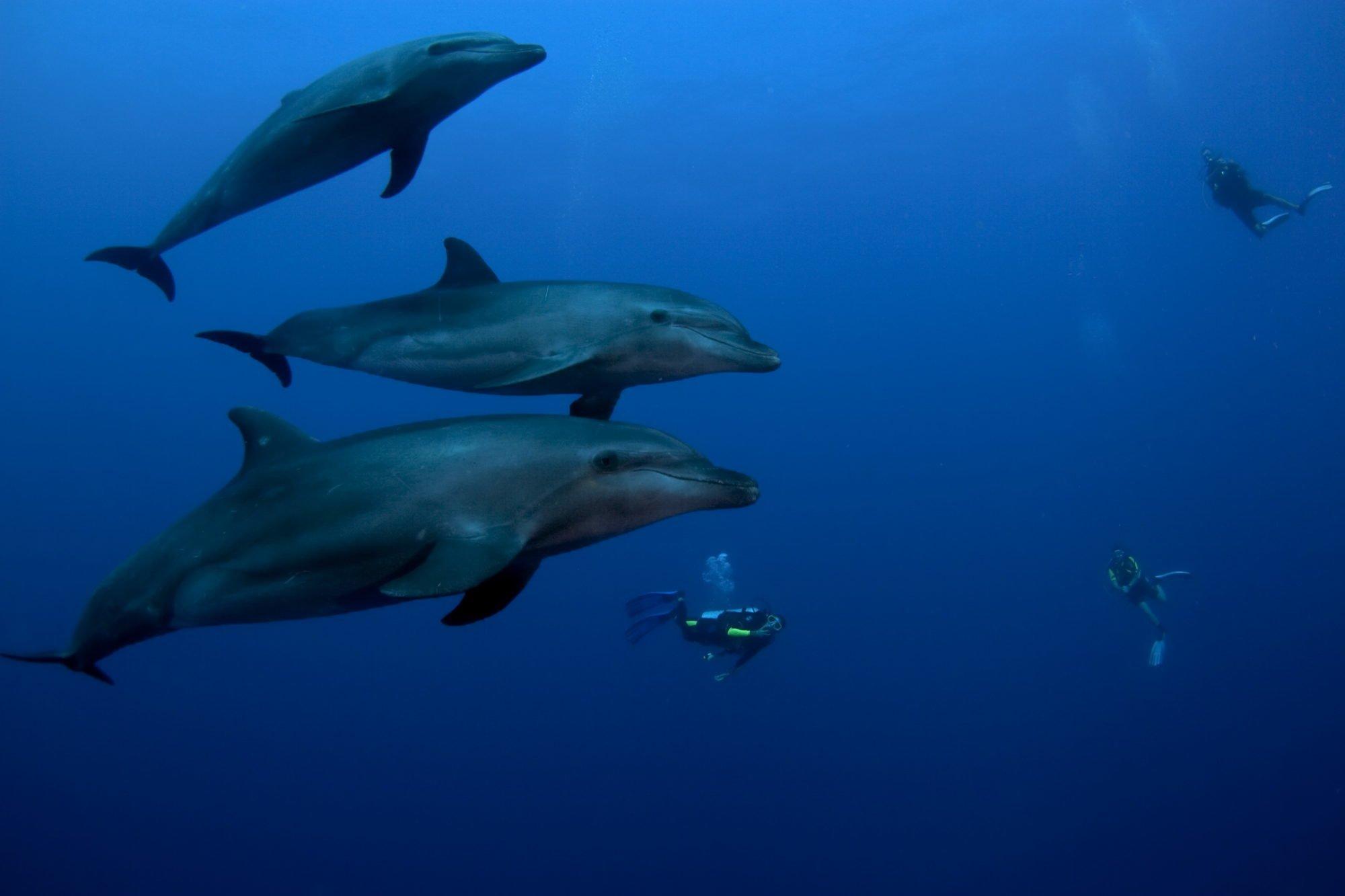 EQUATEUR - Voyage plongée au cœur de l'endémisme des Galapagos