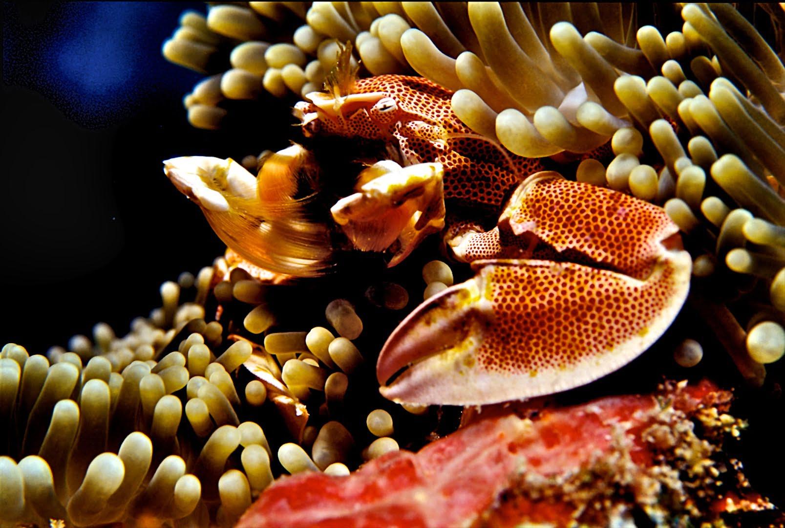 Seafari plongée aux Philippines
