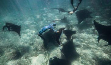 apnea in Komodo