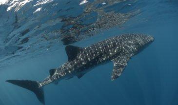 voyage plongée seychelles